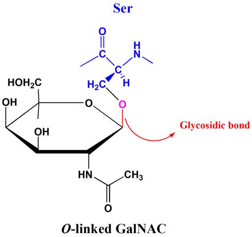 Ligação glicosídica: características, tipos e nomenclatura 2