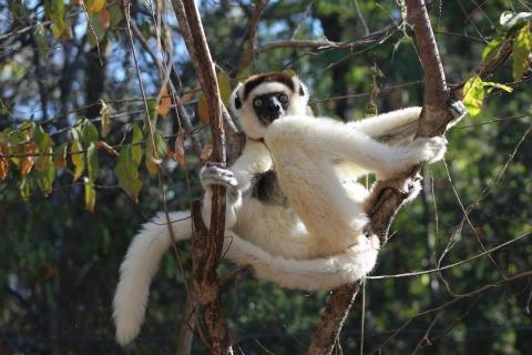 10 animais endêmicos de Madagascar e suas características 1