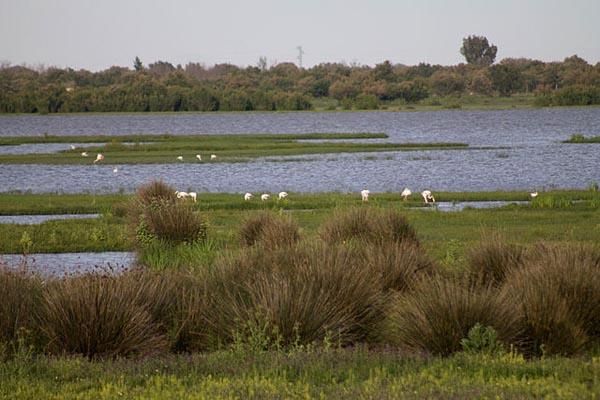 Pantanal: características, relevo, flora, clima, fauna, exemplos 6