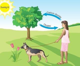 Qual é o metabolismo dos seres vivos? 5