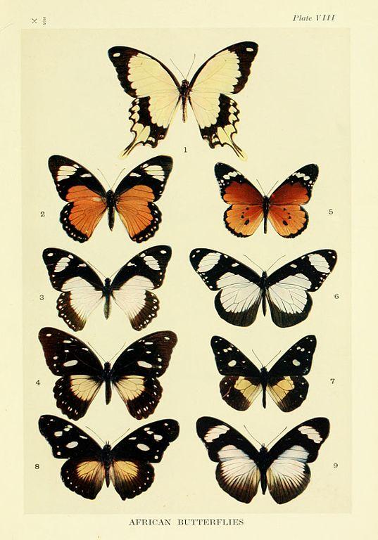 Adaptação biológica: características, tipos, exemplos 1
