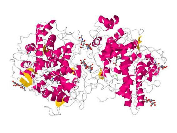 Ácido hipobromoso: características, estrutura, usos 7