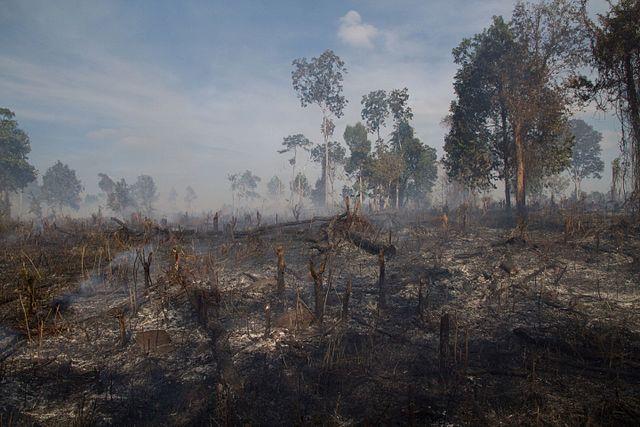 Desmatamento na Colômbia: agentes, causas e consequências 3