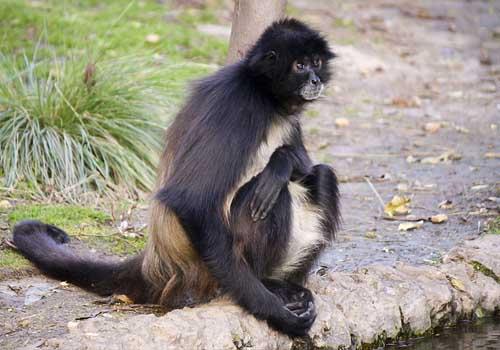 20 animais em extinção na Venezuela 10