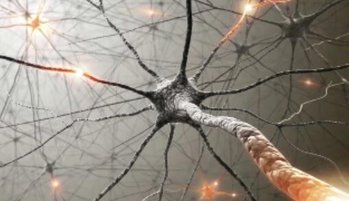 Importância do sistema nervoso humano: 7 razões 1