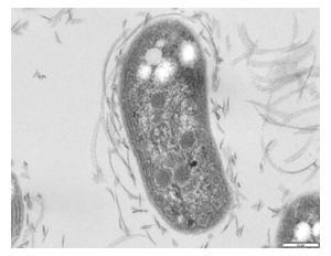 Quimotrofos: características e tipos 1