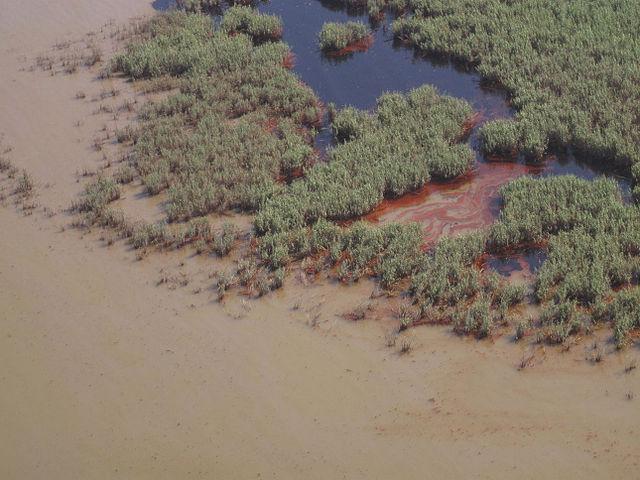 Derramamento de óleo no Golfo do México (2010): causas, consequências 3