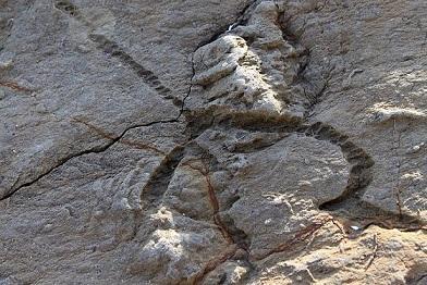 Oligoceno: características, subdivisões, geologia e fauna 33