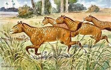Oligoceno: características, subdivisões, geologia e fauna 2