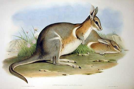 71 animais extintos em todo o mundo (e causas) 28