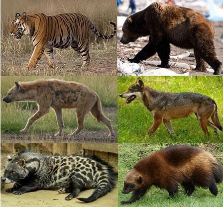 Carnívoros: características, tipos, alimentos, exemplos 1