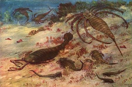 Período ordoviciano: características, geologia, flora, fauna 1