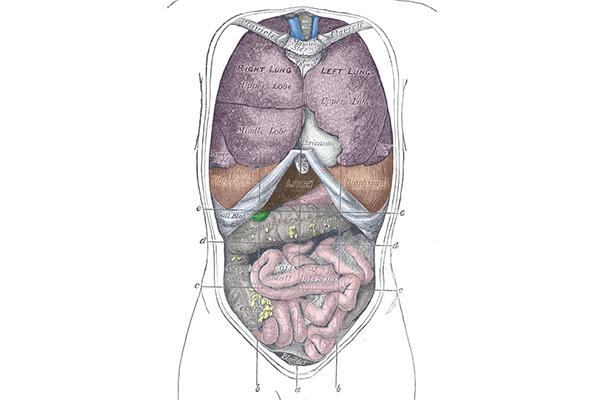 Anatomia bruta: o que estuda, história e aplicações 1