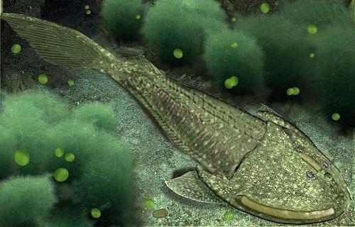 Siluriano: características, subdivisões, geologia, flora, fauna 3