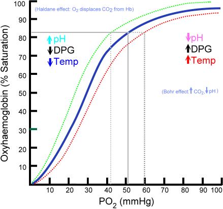 Oxihemoglobina: características, estrutura e curva de ligação 1