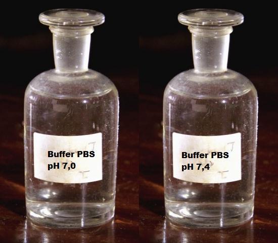 Tampão de Fosfato (PBS): justificativa, preparação e usos 1