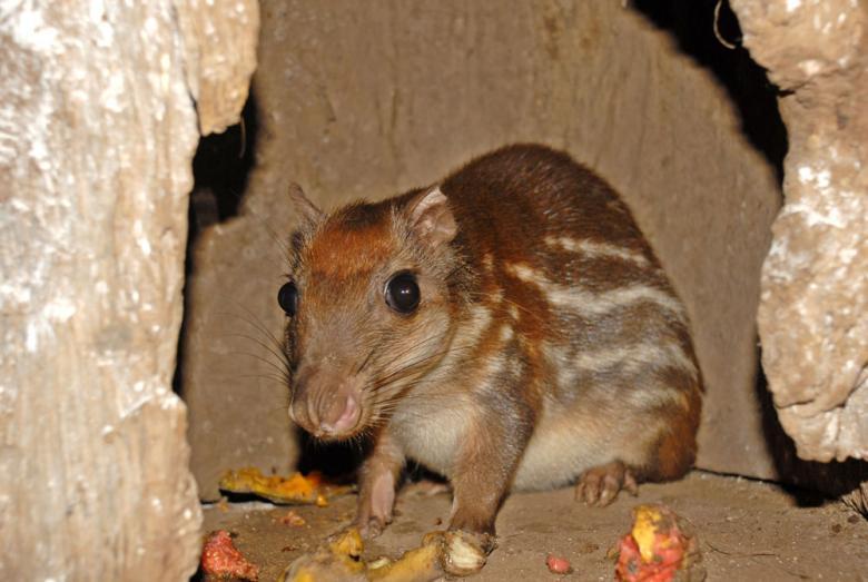 Fardo comum: características, habitat, reprodução, alimentação 3