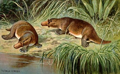 Paleoceno: características, subdivisões, flora e fauna 2