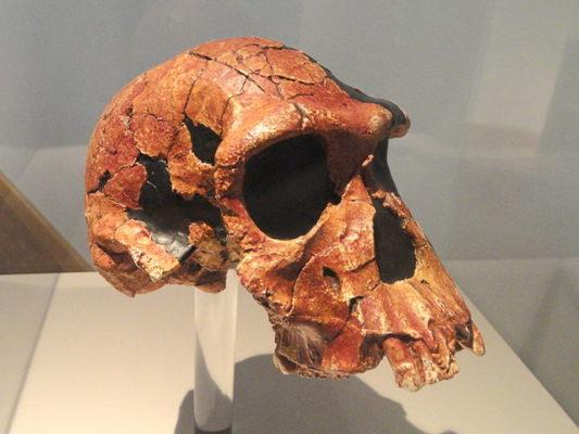 Paleolítico: estágios, características, ferramentas, economia 1