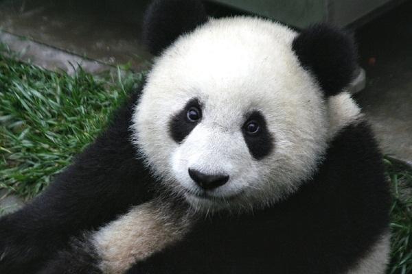 100 fatos curiosos sobre os animais que o surpreenderão 3