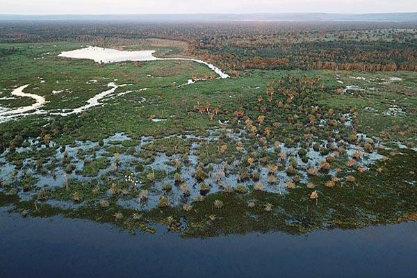 Pantanal: características, relevo, flora, clima, fauna, exemplos 1