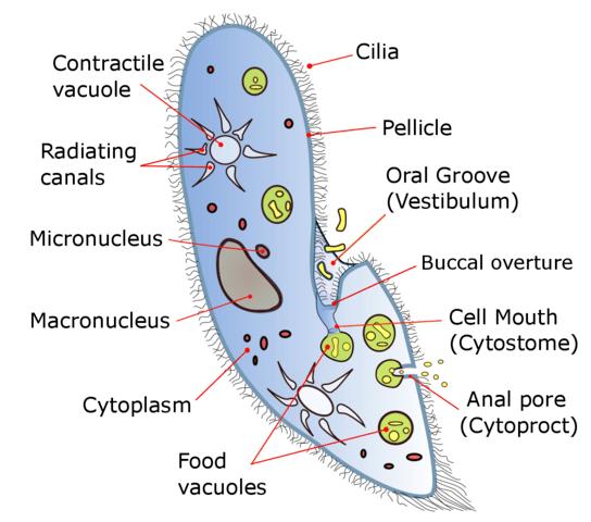 Parâmetros: Morfologia, Alimentação e Classificação 2
