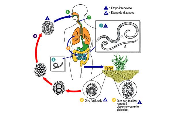 Helmintologia: origem, quais estudos, exemplo de investigações 2