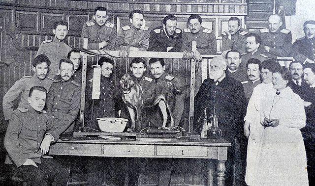 Experiência do cão de Pavlov (condicionamento clássico) 18