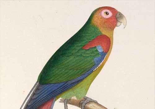 20 animais em extinção na Venezuela 7
