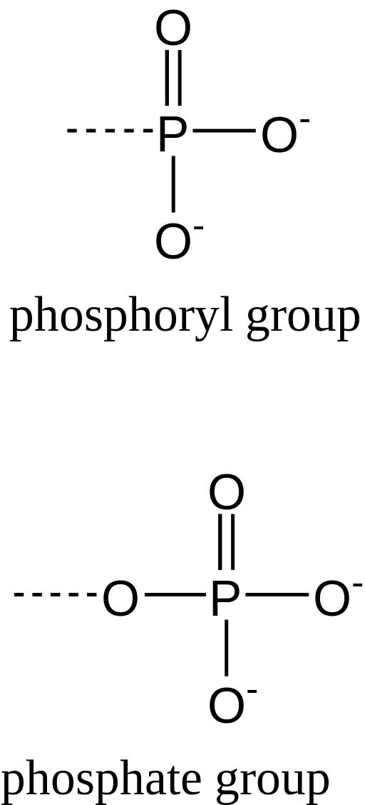 Ligação fosfodiéster: como é formada, função e exemplos 2