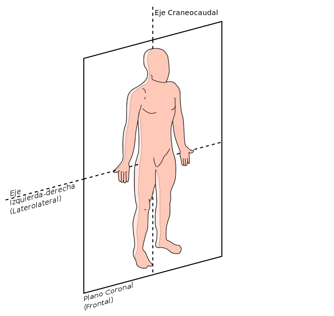Plano frontal ou coronal: características e quando usado 1