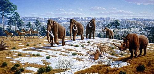 Pleistoceno: características, subdivisões, flora e fauna 45