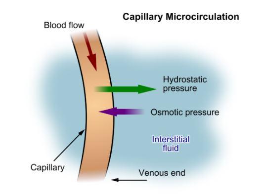 Pressão Oncótica: Fisiologia, Valores Normais 1
