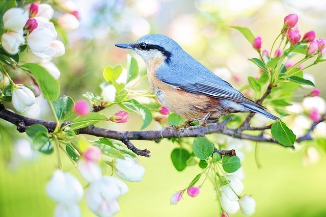 As 85 melhores frases sobre a primavera 1