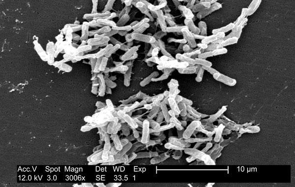 Como foram os primeiros organismos a habitar a Terra?