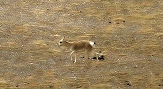26 Animais da floresta e suas características (com imagens) 13