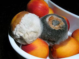 O que causa a degradação dos alimentos e como atrasá-los 1