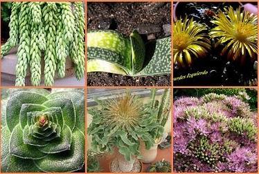 Plantae (Vegetal) Reino: Características, Tipos, Exemplos