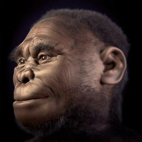 Evolução do homem: estágios e suas características 10