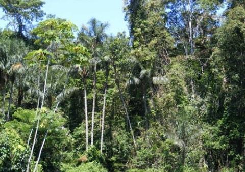 Ecossistemas colombianos e suas características 1
