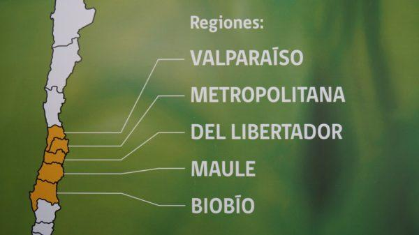 Zona Central do Chile: Clima, Flora, Fauna e Economia 1