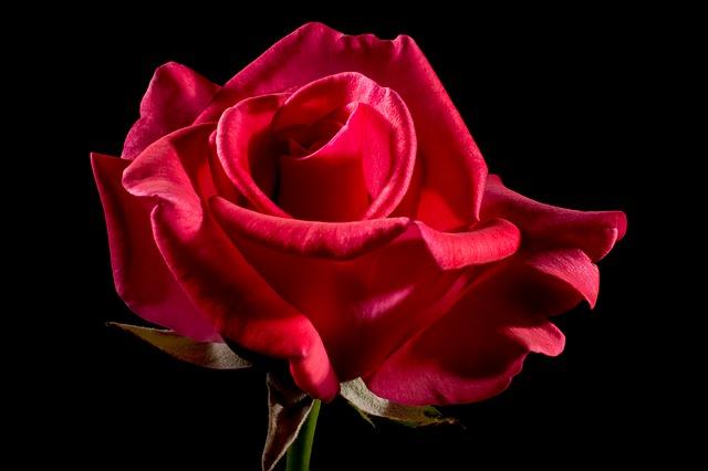 As 110 melhores frases de rosas (muito românticas) 1