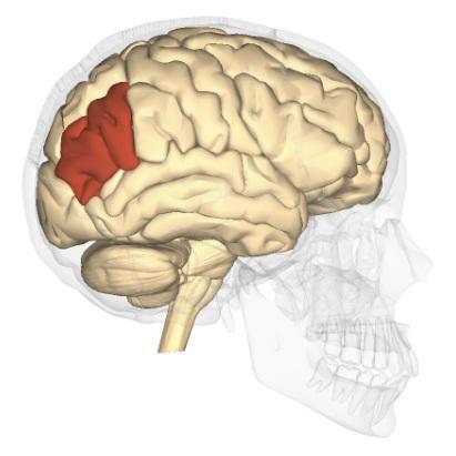 Síndrome de Gerstmann: sintomas, causas, tratamento 1