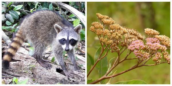 Flora e fauna de Santa Fe: espécies representativas 1
