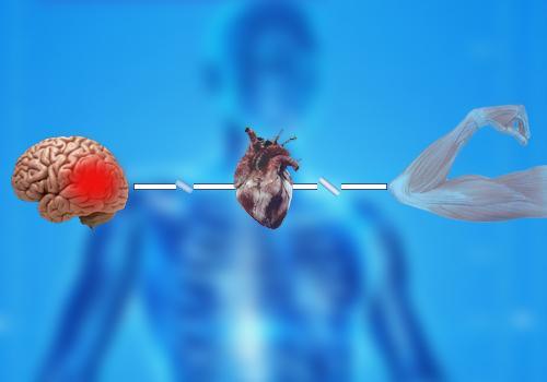 Choque neurogênico: sintomas, causas, tratamento 1
