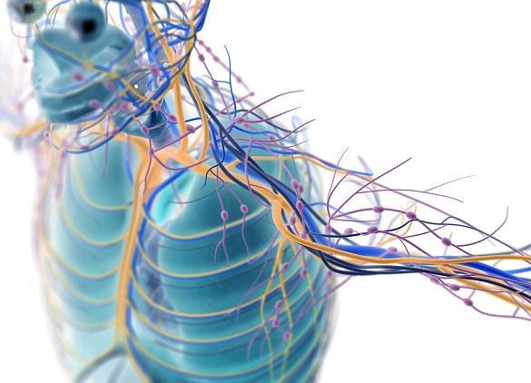 Sistema nervoso periférico: partes e funções 2