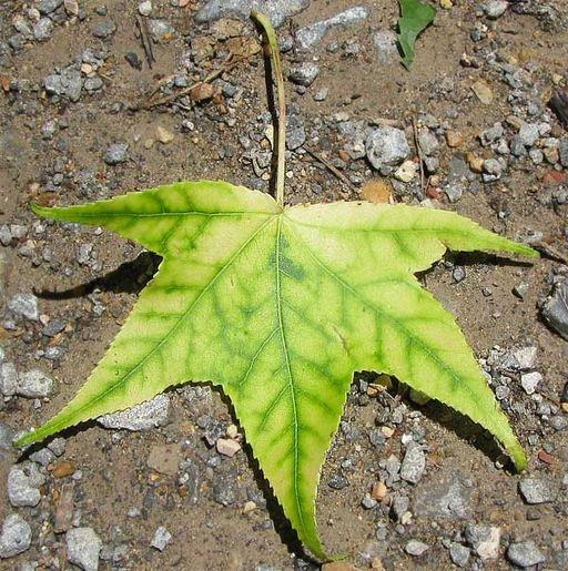 Nutrição vegetal: macronutrientes, micronutrientes, deficiências 4