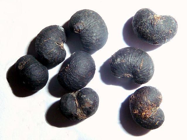 Trachycarpus fortunei: características, habitat, cultivo 6