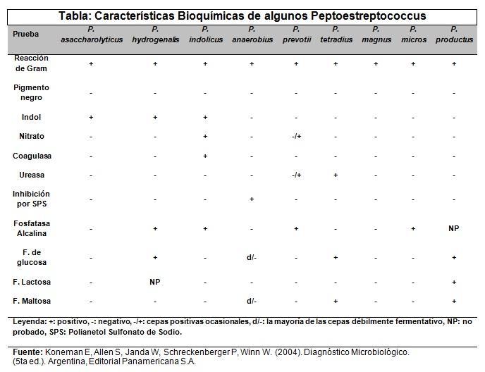 Peptostreptococos: características, morfologia, sintomas 2