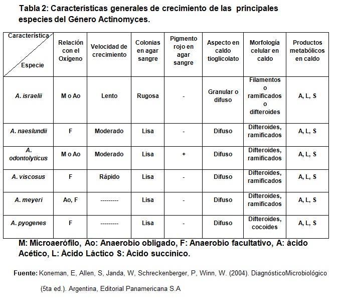 Actinomyces: características, taxonomia, morfologia, patogênese 3